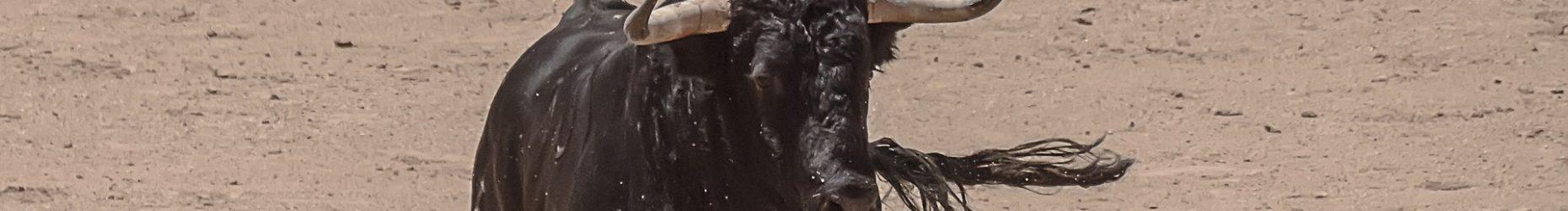 taureau et matador